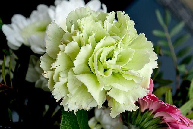 Significado de las flores funerarias:. CLAVEL BLANCO: 🌼 Asociado a un amor puro, noble y leal pero NO pasional.