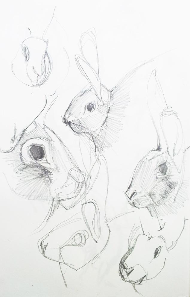 80 best images about dessiner des animaux on pinterest - Croquis animaux ...