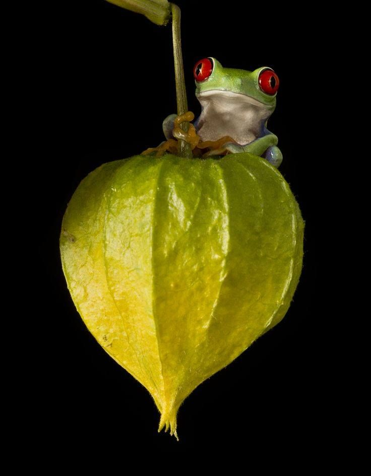 Guardian of the green lantern https://www.facebook.com/144196109068278/photos/pb.144196109068278.-2207520000.1419188840./247022638785624/?type=3&theater