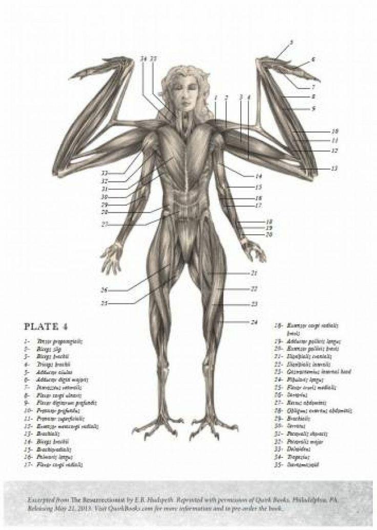 67 best the resurrectionist anatomy images on Pinterest | Anatomy ...