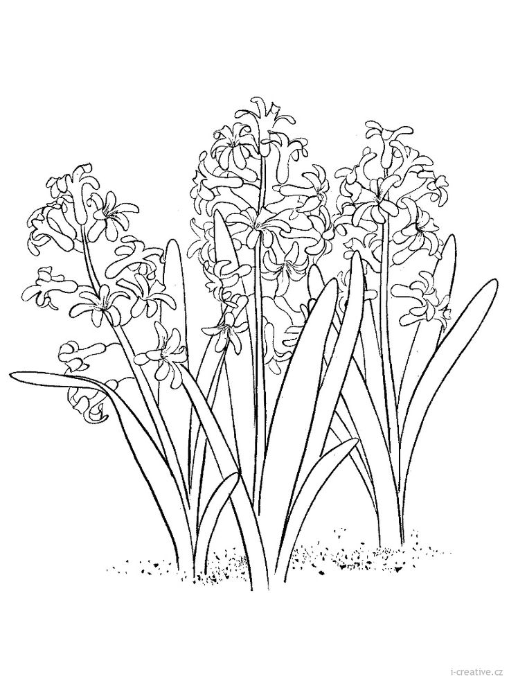 jaro-hyacint.jpg (800×1066)