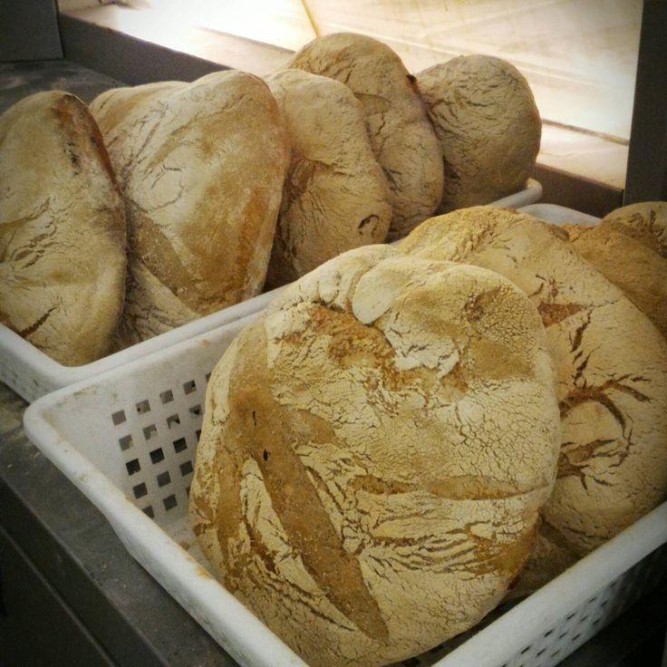 Pane fresco pugliese Farina del mio sacco (@FarinaDelMioSac)   Twitter