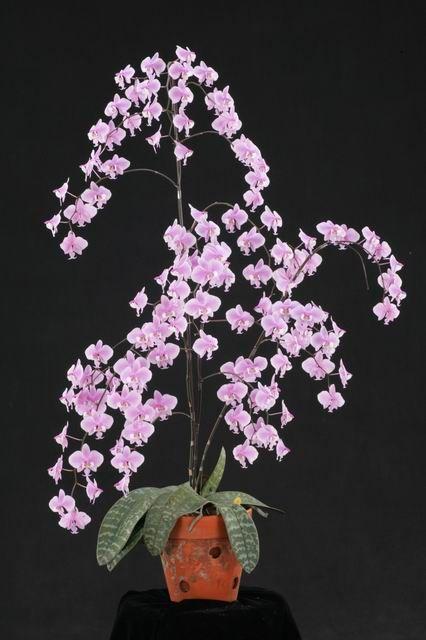 australian orchids - Google Search