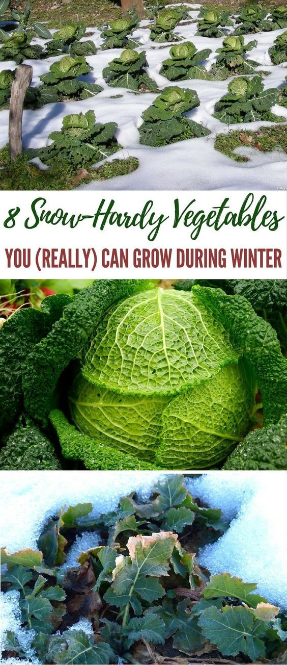 8 Snow-Hardy Vegetables You (Really) Can Grow During Winter - Winter will be here soon, so it's time to start thinking about what vegetables you can grow easily in your survival garden that can make it through the harsh weather. Image by pxleyes.com
