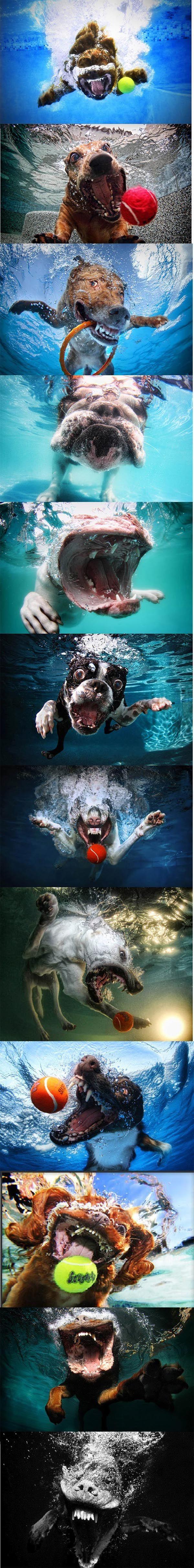 Des chiens sous l'eau