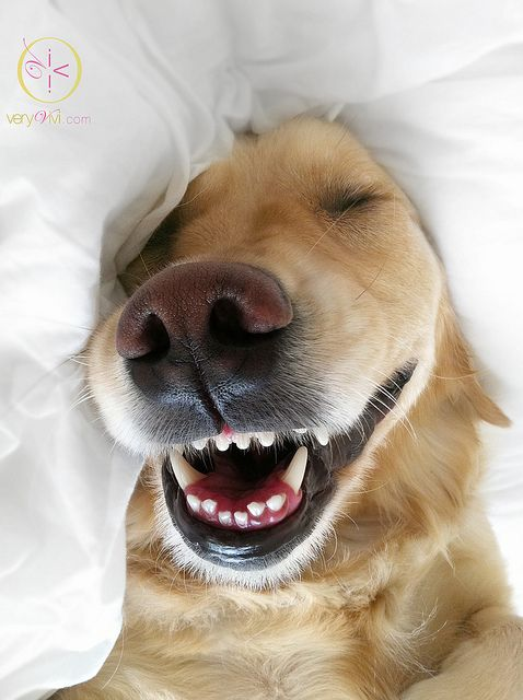 CLEAN SHEETS - One of life's simple pleasures.   : )