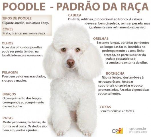 Padrão da raça Poodle