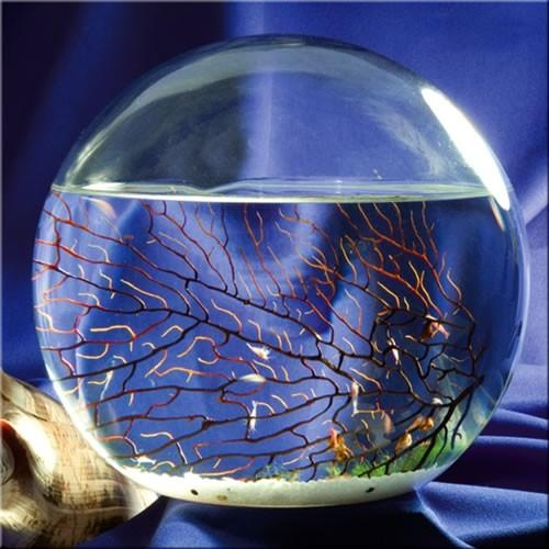 Ecosphere living ecosystem. Watch Miniature life in a glass ball as it happens.