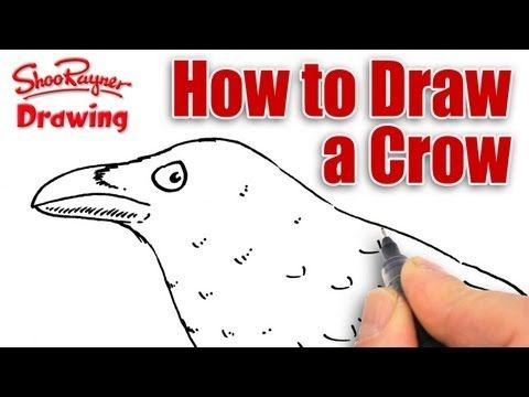 Learn how to draw a Crow - real time tutorial