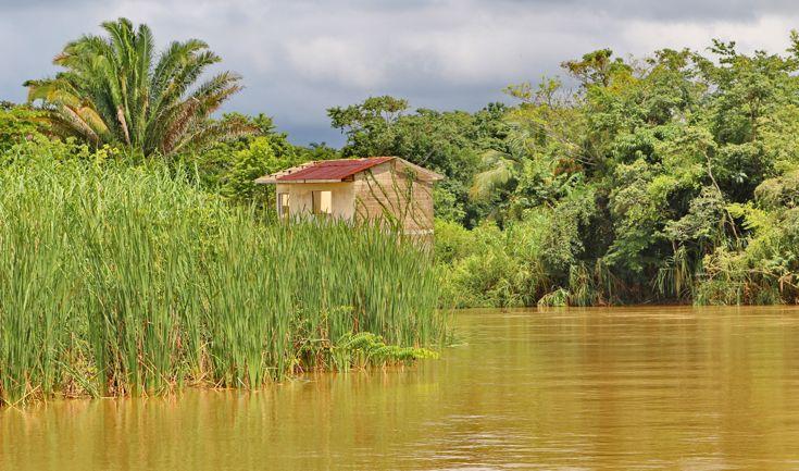 La fitta foresta si allarga sulle sponde del Monkey River, circondato da alte palme da cocco, sleeping hibiscus e orchidee nere.