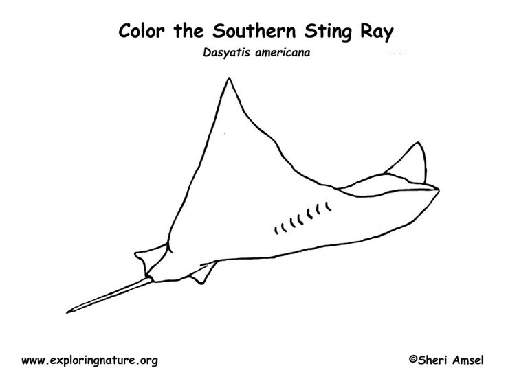 Stingray Coloring Pictures Free Coloring Pages