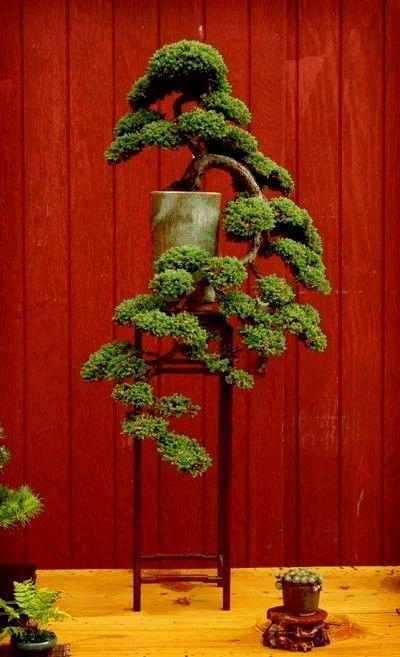 ☼֍Don't you love this cute #bonsai tree!♦♥       #BonsaiInspiration