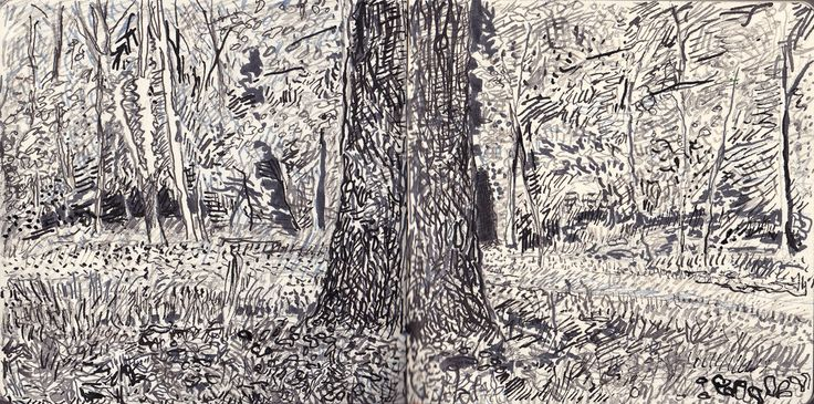 Wytham woods, reed pen drawing