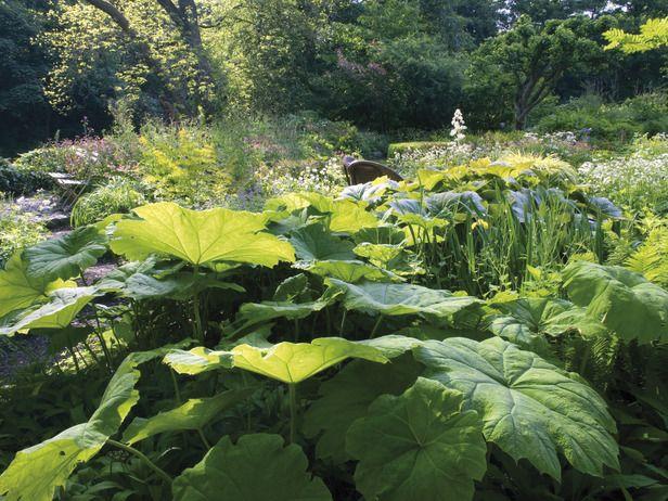 Schaduwplanten | Tuin-forum
