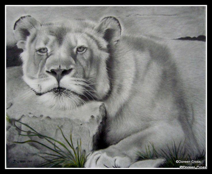 Lioness in graphite