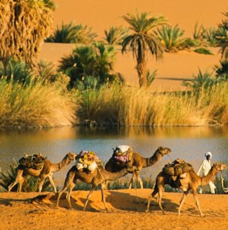 Sahara Desert Oasis | Animals &birds. | Pinterest | Oasis ...