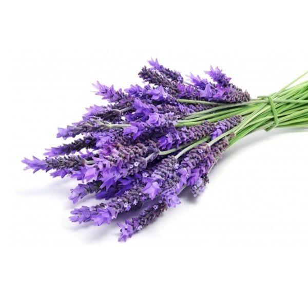 Lavendel Ljus Vortex energi via Healingresa med din Ängel. Click on the image to see more!