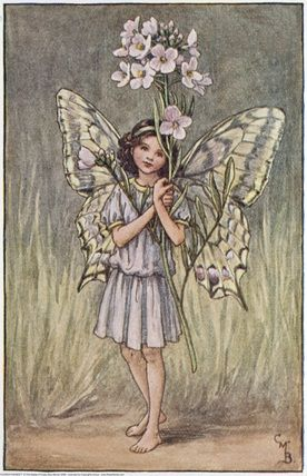Illustration for the Lady's Smock Fairy from Flower Fairies of the Spring. A girl fairy stands facing front holding a bunch of lady's smock.     Author / Illustrator  Cicely Mary Barker