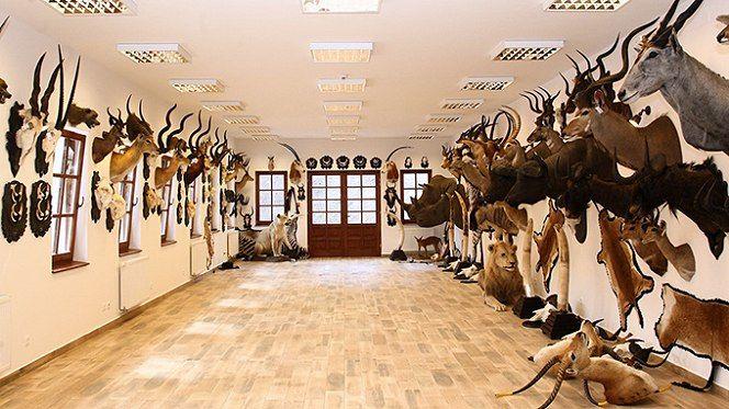 Alsóperei (Nádasdy) arborétum (Olaszfalu közelében 6.3 km) http://www.turabazis.hu/latnivalok_ismerteto_4597 #latnivalo #olaszfalu #turabazis #hungary #magyarorszag #travel #tura #turista #kirandulas