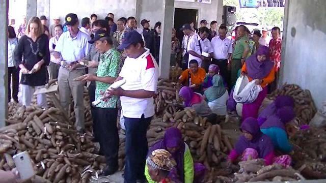 Kementrian Pertanian Kembangkan Modifikasi Singkong
