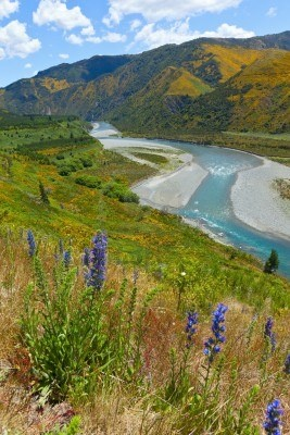 Lewis Pass, South Island, New Zealand  #travel