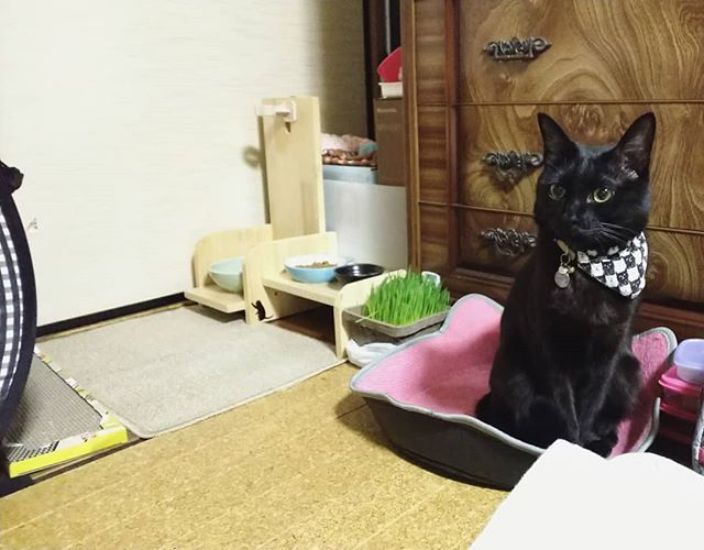 撮影日︰2018年2月10日 じぃじとばぁばのお家inポポたん😸 おすましさん? #猫が猫をかぶる #猫チョコピーカンで猫助け #猫モフー#ねこのきもち #re_petpark #picneko  #ねこ部 #ペットスマイル #ペコねこ部#みんねこ #nekoclub #eclacat #ねこバカ#保護猫 #ねこまみれ #猫好きな人と繋がりたい #world_kawaii_cat  #愛猫#黒猫 #猫部 #にゃんすたぐらむ #ねこすたぐらむ #popo#ポポ#黒猫ポポたん
