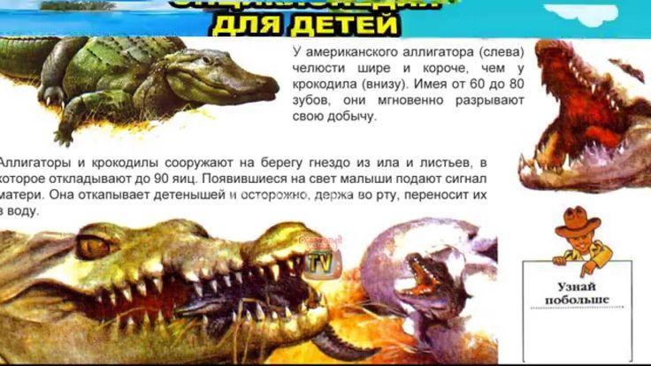Энциклопедия для детей. Буква А. Аллигатор.