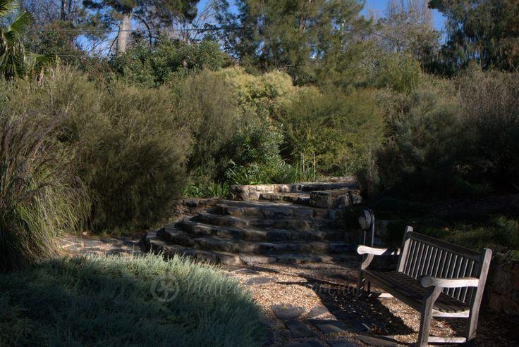 Walcott's garden in Canberra