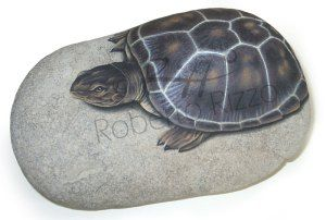 Turtle on a rock | Rock painting art by Roberto Rizzo