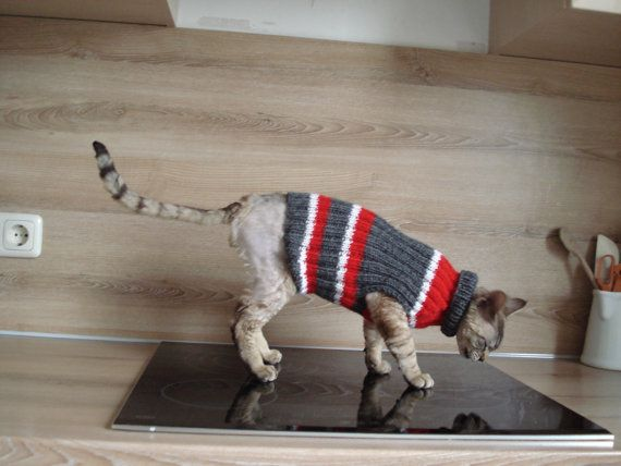 Hand knitted Cat Small Dog Sweater Jumper Jacket by TrendyKitty, €25.00