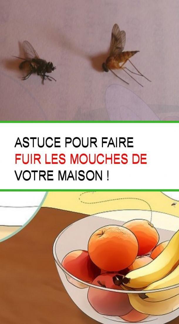Comment Faire Fuir Les Mouches : comment, faire, mouches, Astuce, Faire, Mouches, Votre, Maison, Beef,