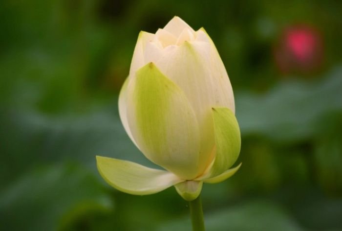 꽃봉우리 | 그 꽃 by 릴리밸리 카메라를 친구 삼아 꽃사진 담는 ...