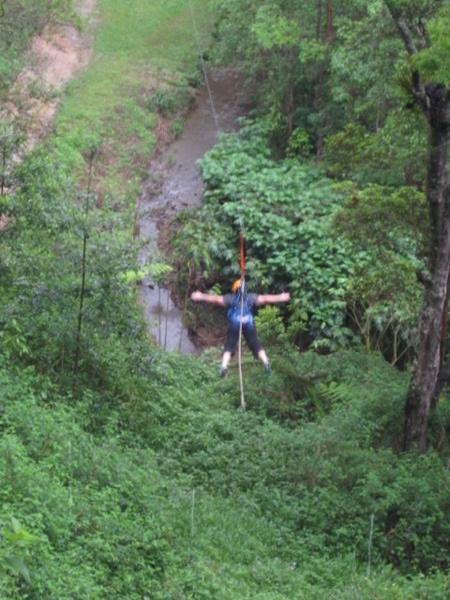 Flying fox, Camp Eden