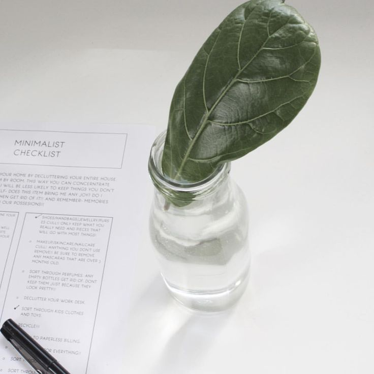 Fiddle leaf fig propagating  See this Instagram photo by @fromlondontobrooklyn • 22 likes