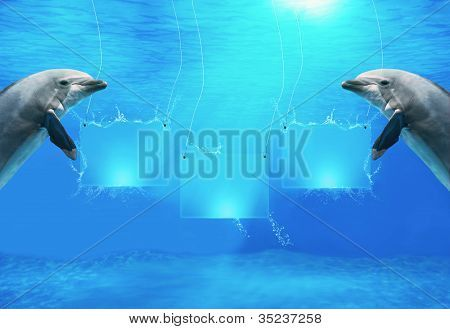 Underwater Banners With Dolphins