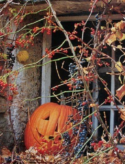 Halloween: Fall Pumpkin, Halloween Stuff, Fall Decor, Autumn, Hallows Eve, Old Windows, Halloween Pumpkin, Jack O' Lanterns, Carvings Pumpkin