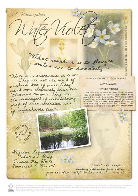 Image result for bach flower remedies WATER VIOLET