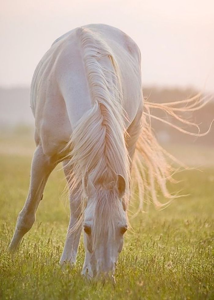 """"""" Living in the moment, being aware and only thinking about what's immediately occurring is natural for horses… """"  Check out this article http://snip.ly/thezt"""