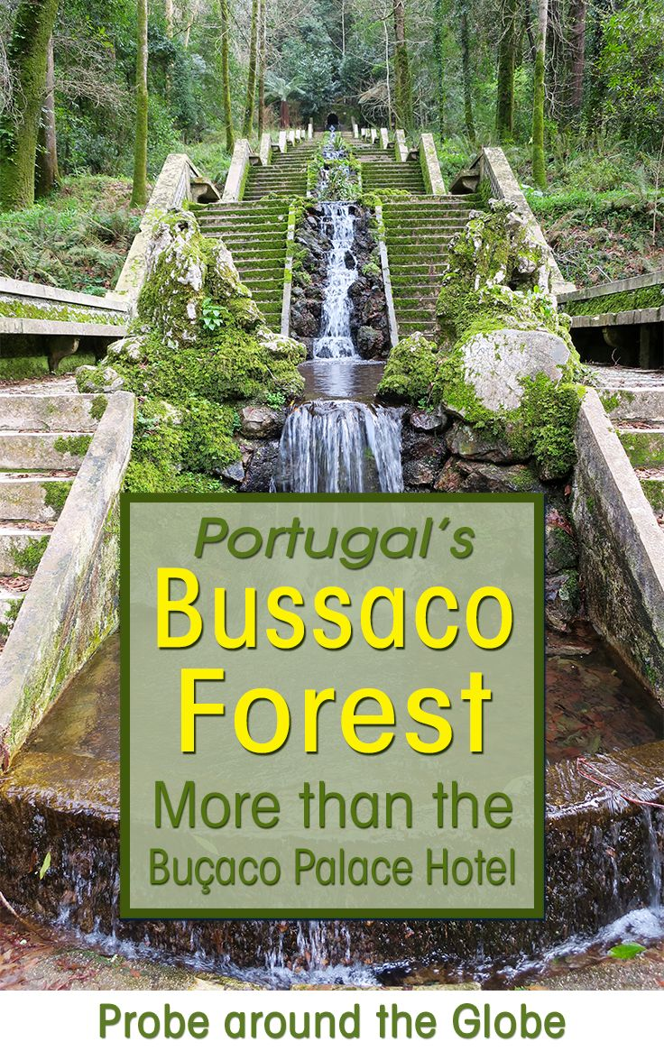 Portugal's Bussaco Forest is most famous for the Buçaco Palace Hotel, but there is a lot more to see at the Buçaco Forest in Portugal. Discover the eery forest with the ancient arboretum, 600 year old trees, fern valley and the magical fountain. Read more about the perfect day in nature in Centro #portugal .