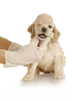 Dog Health   5 Steps to Remove Ticks from Your Dog   Pets Best