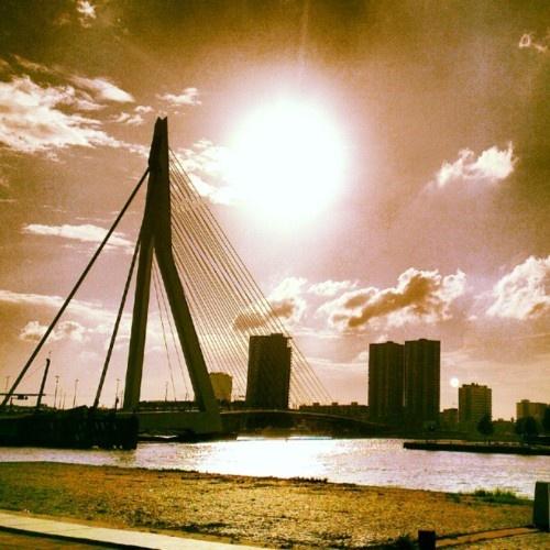 De zwaan in de zon #Rotterdam (Taken with instagram)