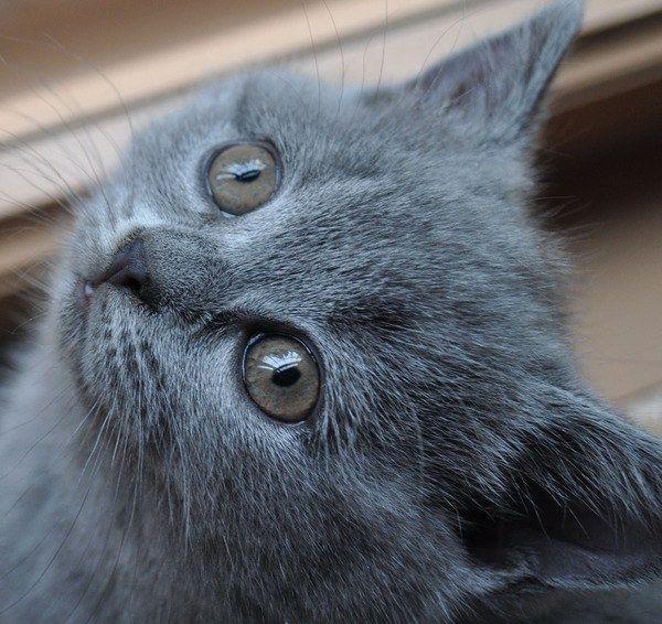 запор у кошки вазелиновое масло