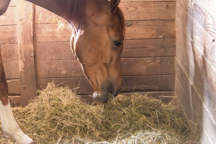University of Kentucky Addresses Myths About Horse Hay