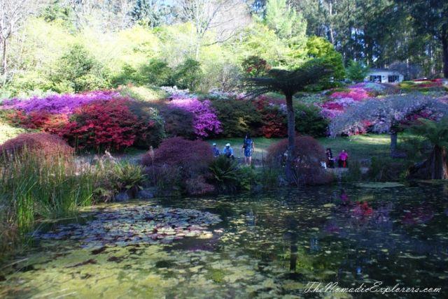 Looking for sakura in the National Rhododendron Gardens, Olinda
