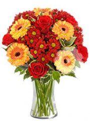 gerbery , chrazanthemy, růže - rozvoz květin