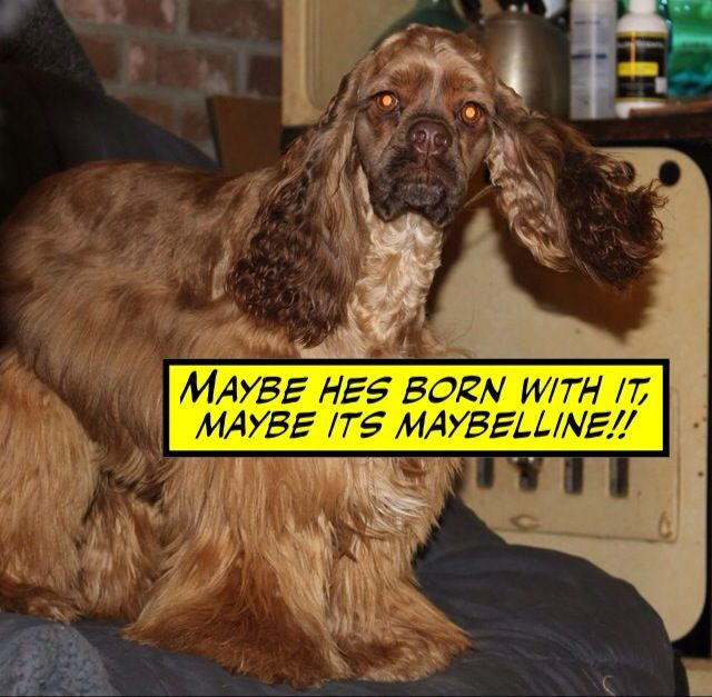 Ricky Nottabearnewfoundlands Americankennelclub Nottabear Nottabeardogs Instadog Ricky Rescuedog Re Newfoundland Dog Giant Dogs American Kennel Club