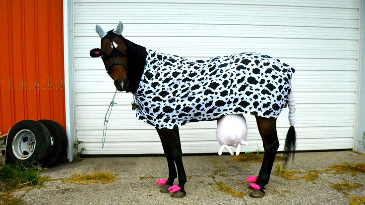 Check out some great horse costume ideas, and try out a ...
