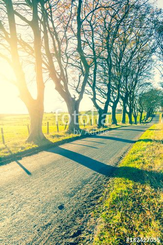 """Download the royalty-free photo """"Beautiful rural road with trees and sunlight in Spring, Scotland"""" created by JulietPhotography at the lowest price on Fotolia.com. Browse our cheap image bank online to find the perfect stock photo for your marketing projects!"""