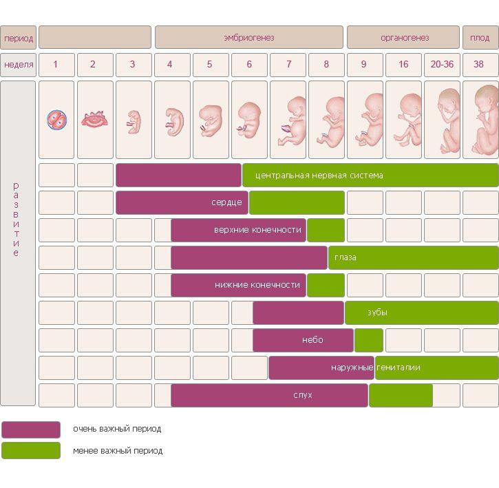 Календарь беременности — месяц первый