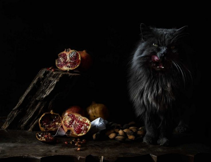 Best Cats Images On Pinterest Cat Cats And Drawing Animals - This photographer is celebrating stray cats through majestic portrait photographs